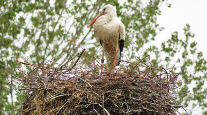 Woohoo, it's a stork!