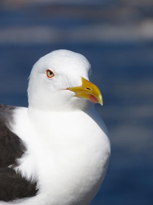 ballet-seagull-2
