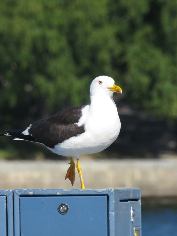 ballet-seagull-3
