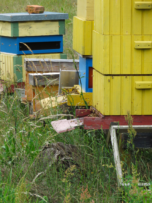 bee-hives-1