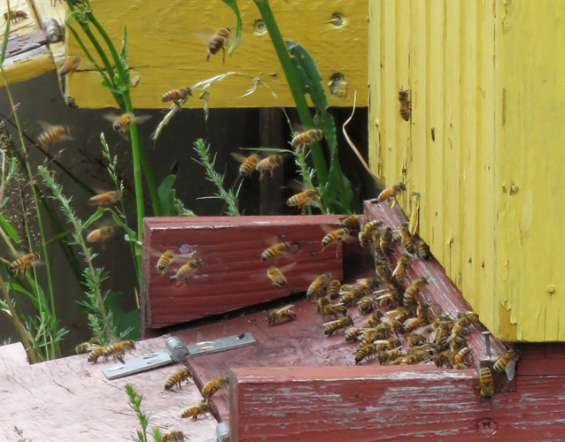 bee-hives-2