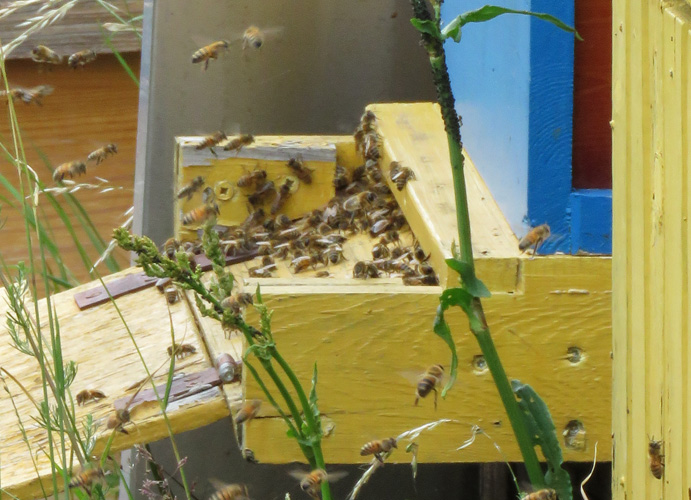 bee-hives-3