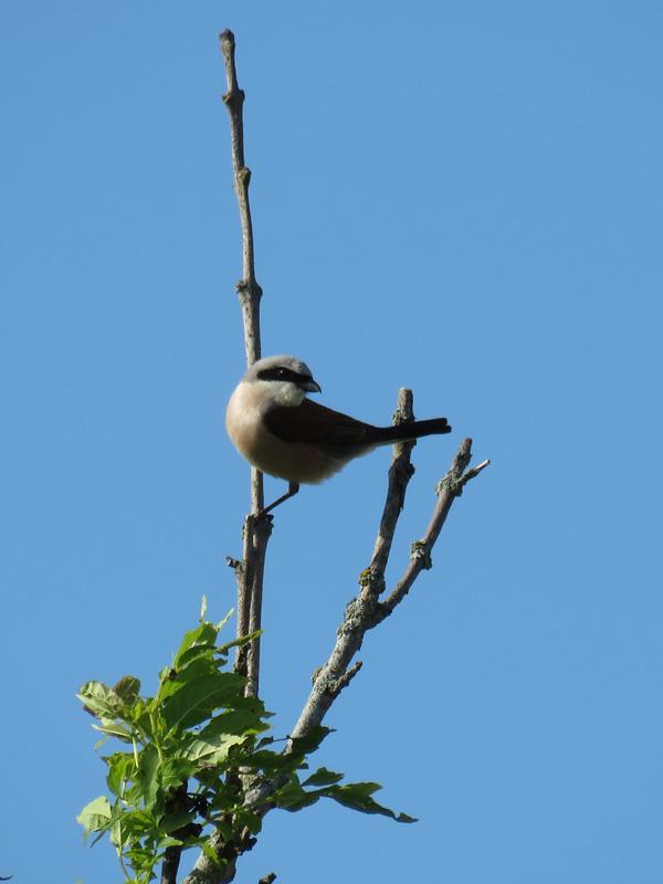 bird-at-sanctuary-1