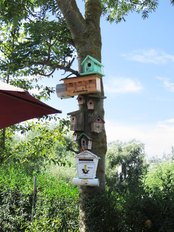 bird-boxes-1