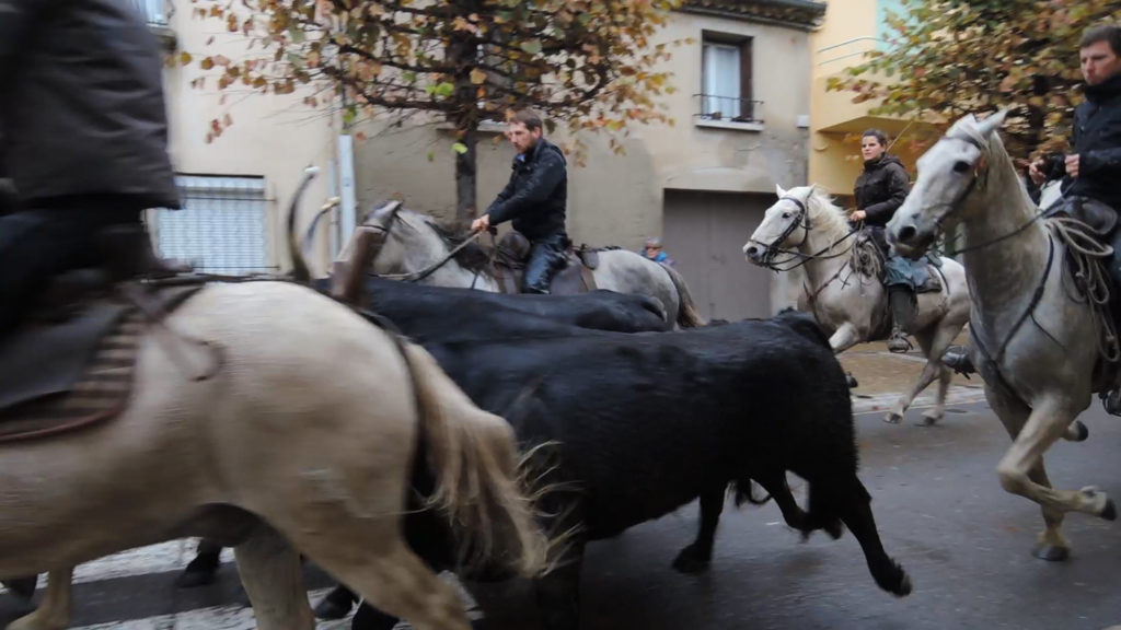 bull-run-3