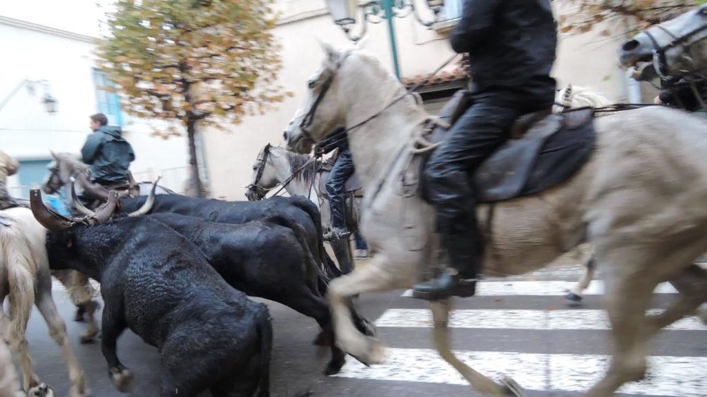 bull-run-6