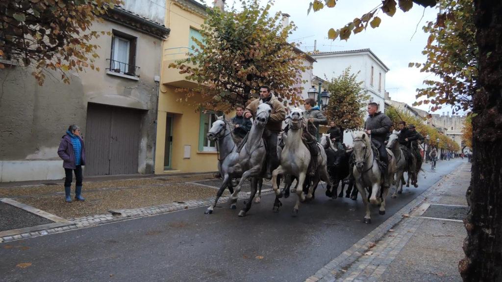 bull-run-9