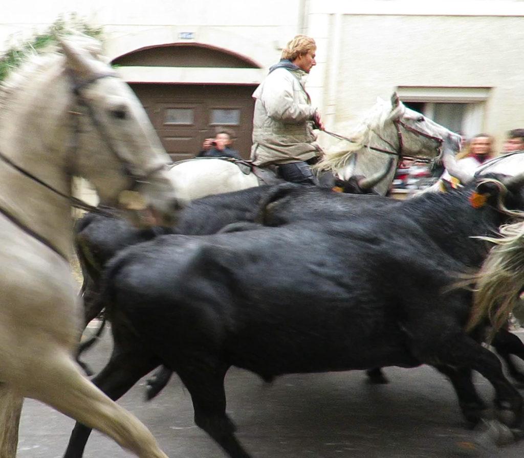 bull-run-part-two-6