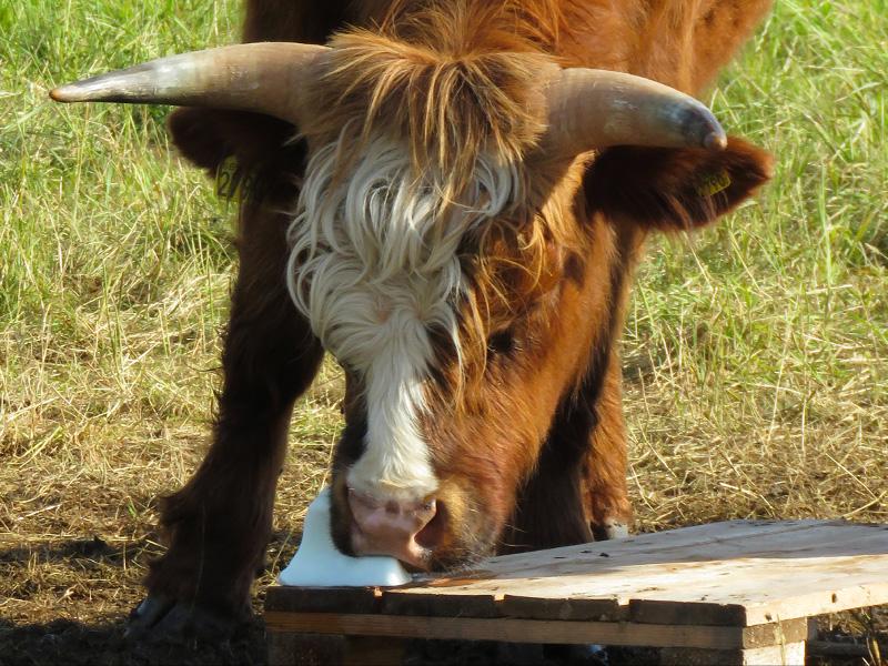 cows-at-bird-sanctuary-3