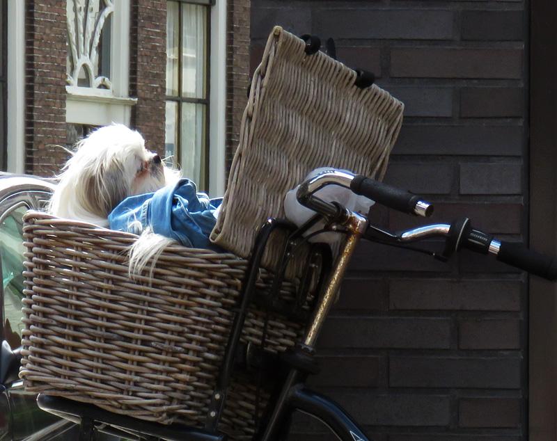 dog-in-basket