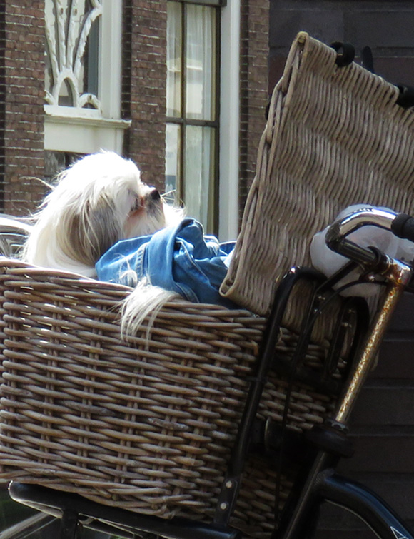 dog-in-basket2