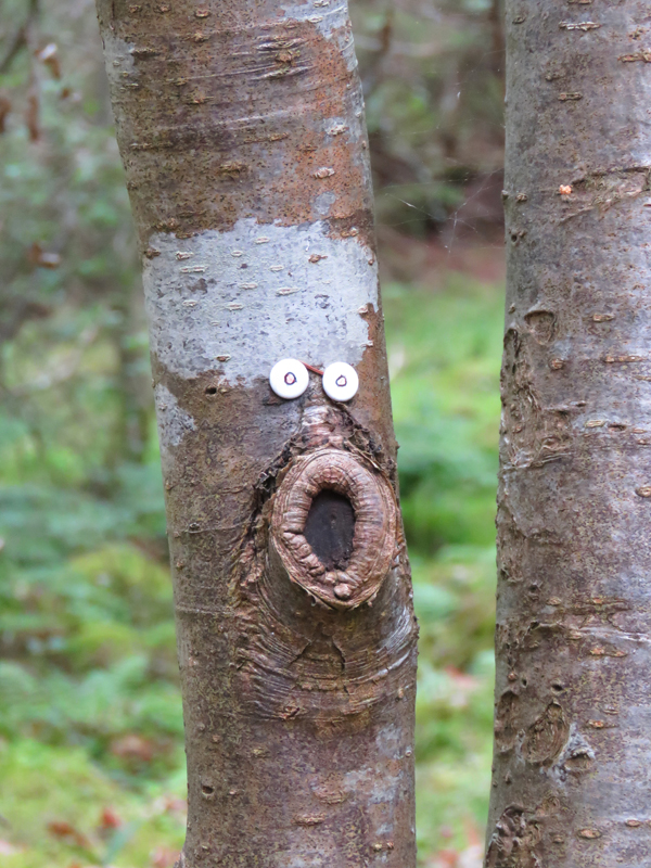 face-on-a-tree
