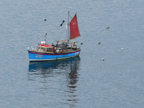 A fishing boat being staked out by expectant seagulls.
