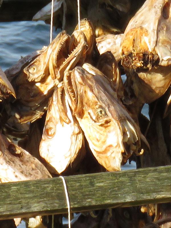 fish-racks-3a