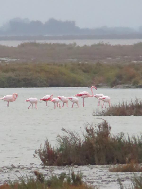 flamingo-6