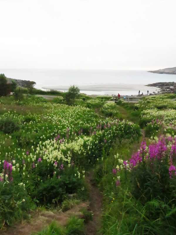 rorvika-beach-near-henningsvaer-2