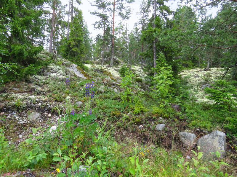 silver-halviken-moss