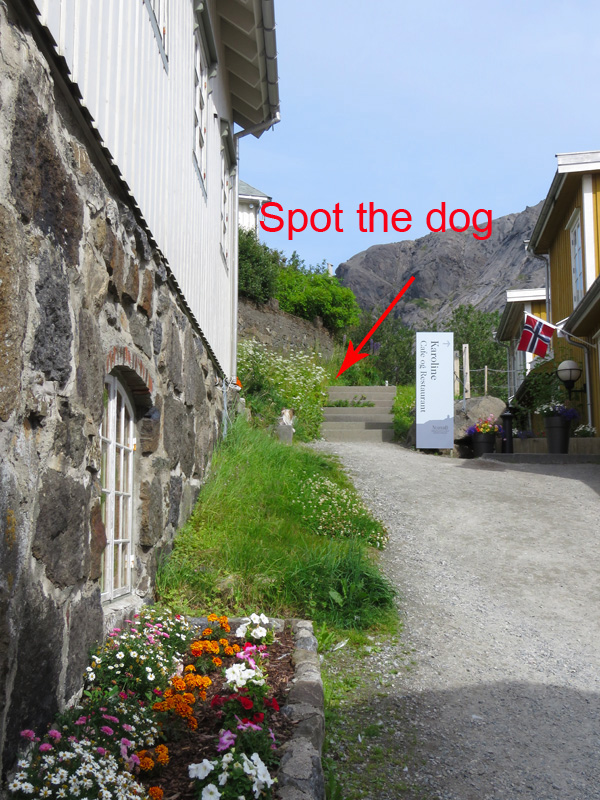 spot-the-dogq