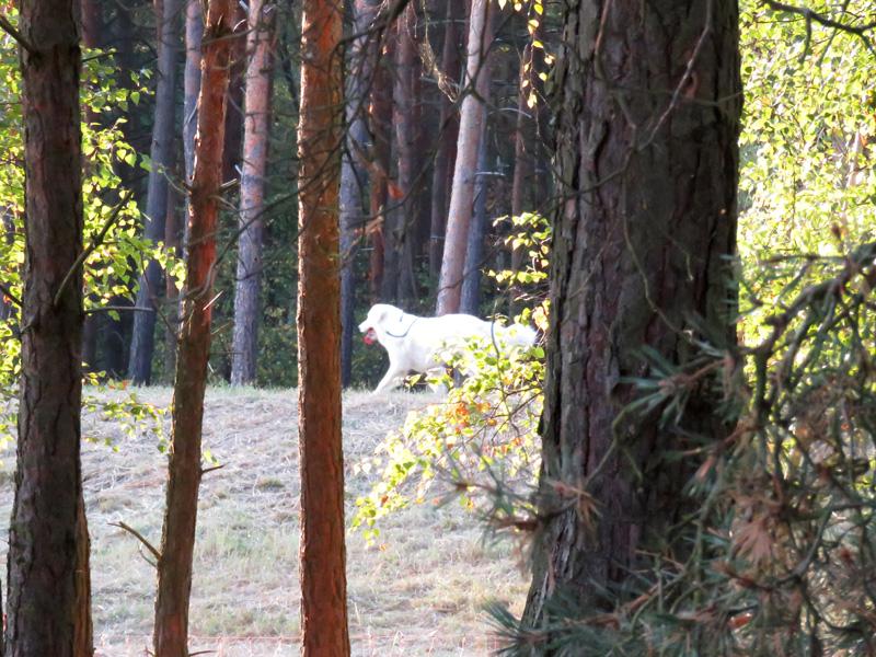 white-doga