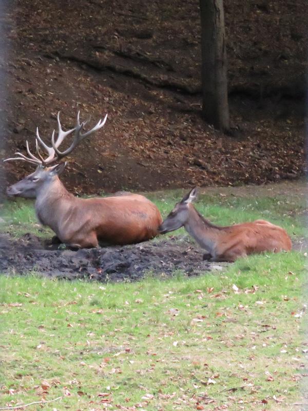 wildlife-park-8