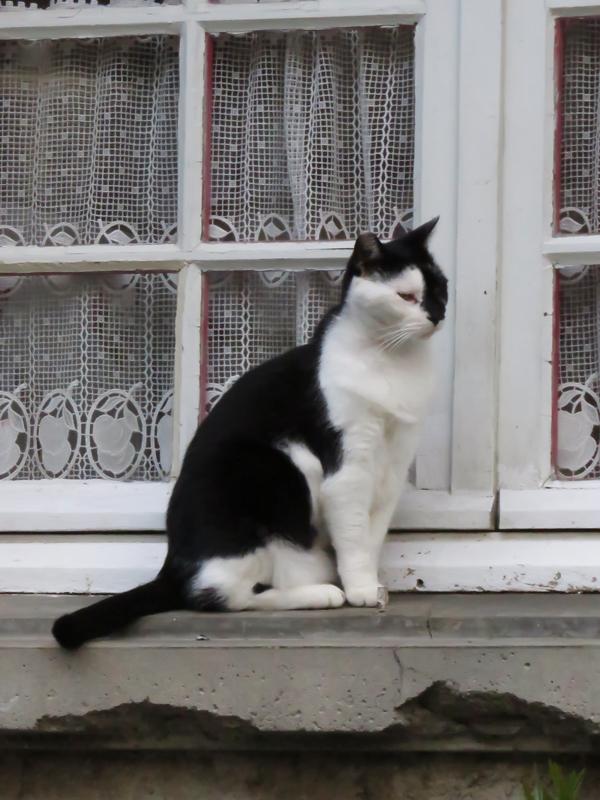 cat-cassonne-2