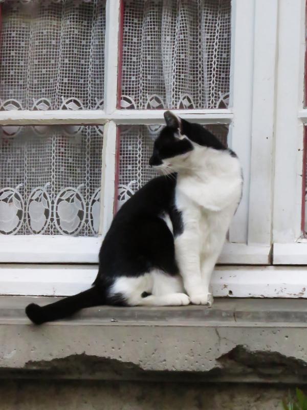 cat-cassonne-3