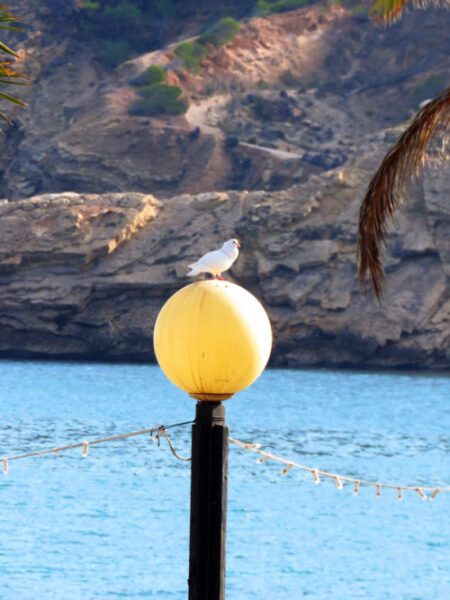 In L'Albir doves stand in for the seagulls while they are on their holidays.