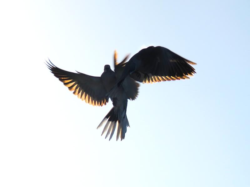 1 Doves
