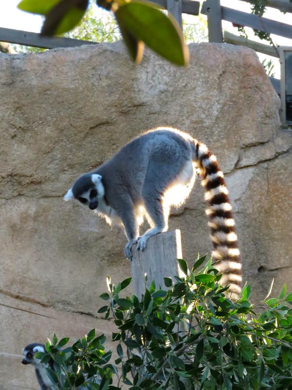 104 Mini Hollywood zoo