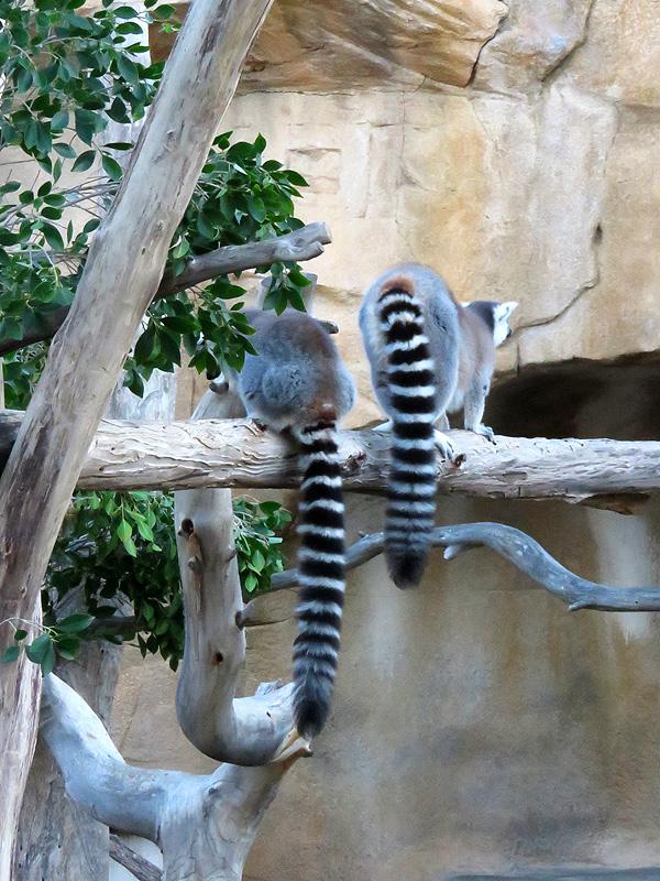 106 Mini Hollywood zoo