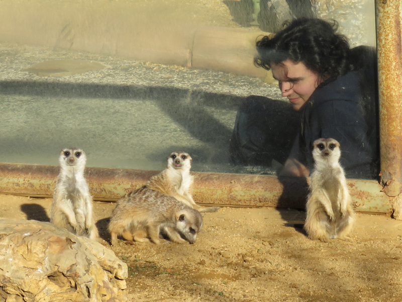67 Mini Hollywood zoo