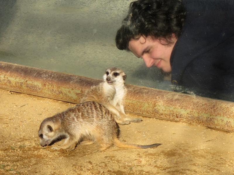 71 Mini Hollywood zoo