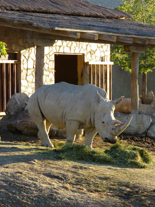 96 Mini Hollywood zoo