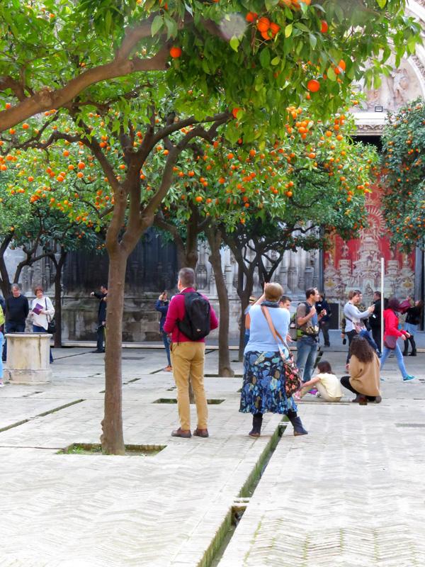 23 Seville