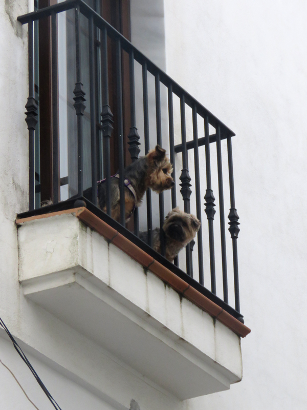 Two 'chatty' dogs above us in the town