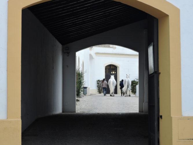 29 Fundacion Real Escuela Andaluza del Arte Escuetre