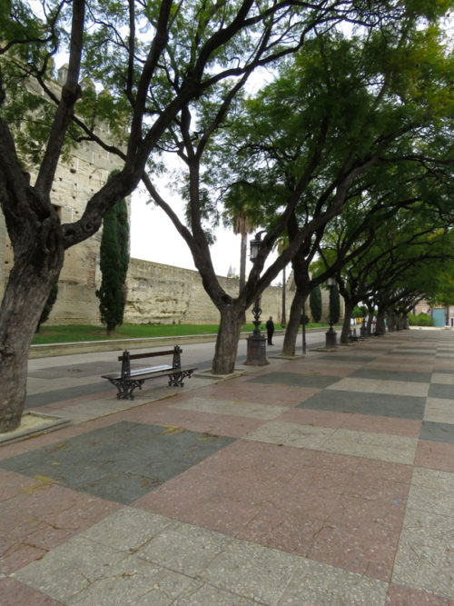 53 Fundacion Real Escuela Andaluza del Arte Escuetre