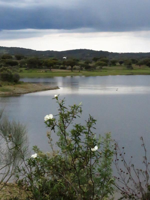 26 Dam near Terena