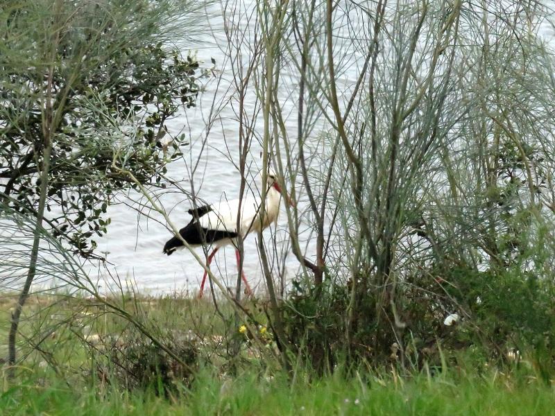Stork on beach