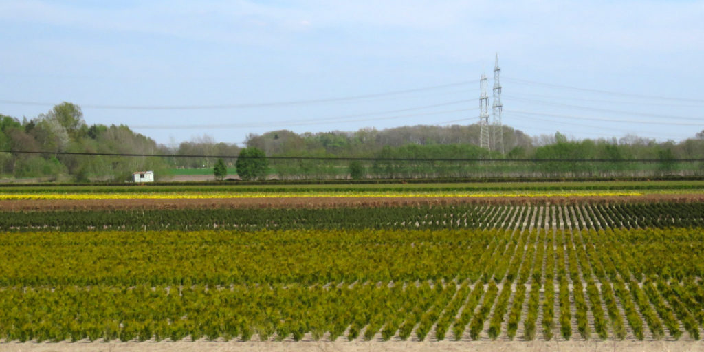 I liked the stripes of colour in this field.