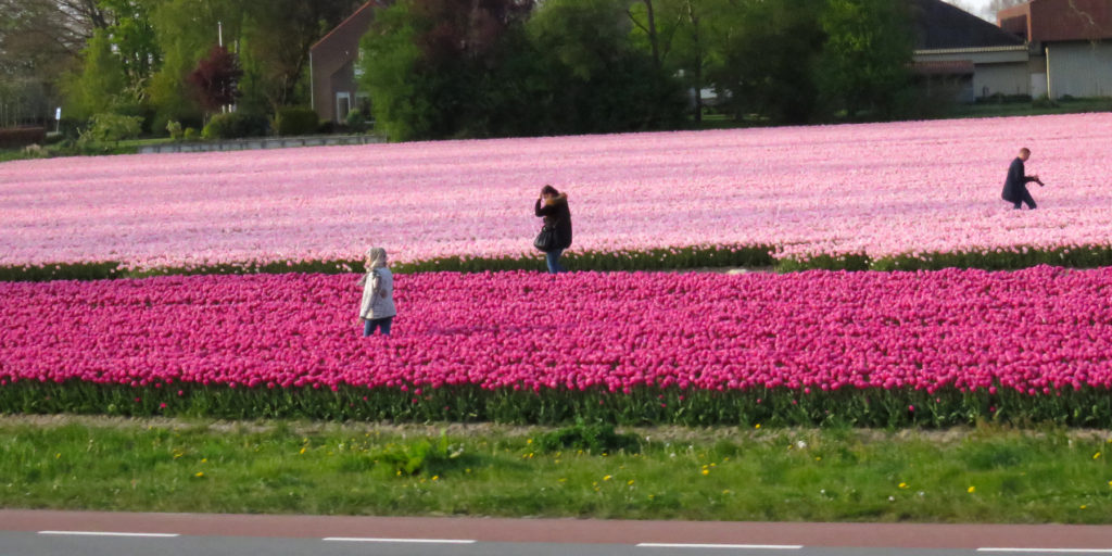 I love the flower fields, so do they it seems.