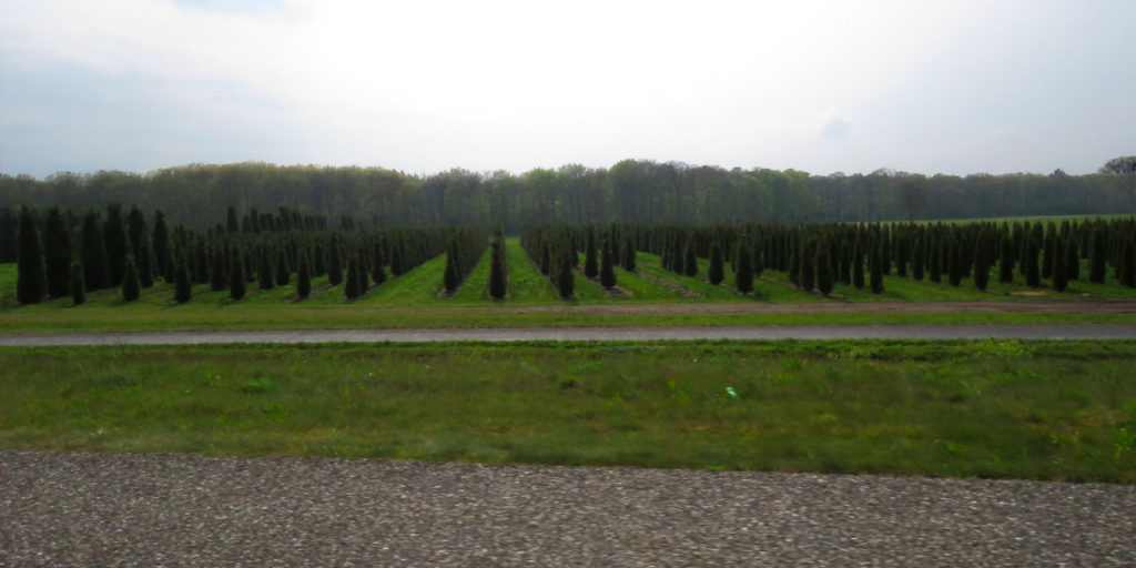 Such neat lines of conical trees.