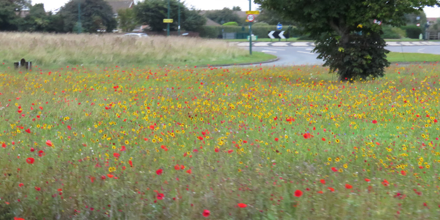 Lots of wild flowers.