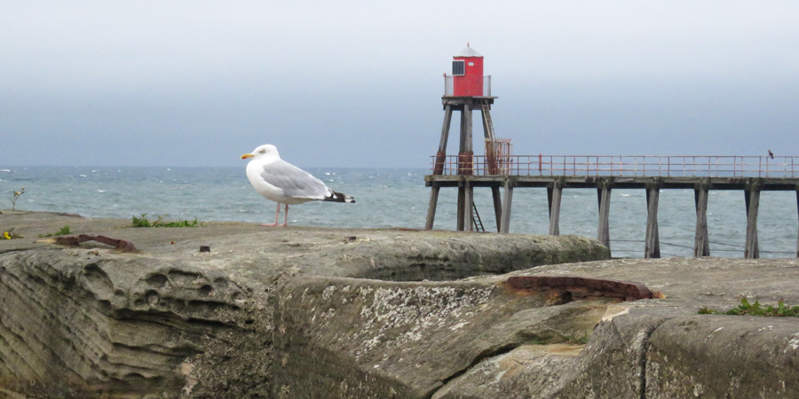 Seagull sentry guarding the entrance to the harbour.